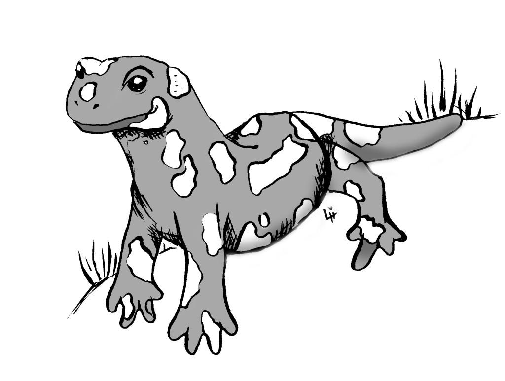 Pán Salamander
